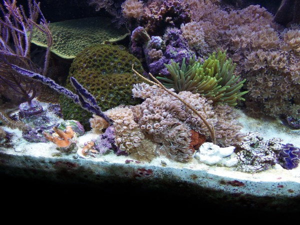 Randy's 180 Reef