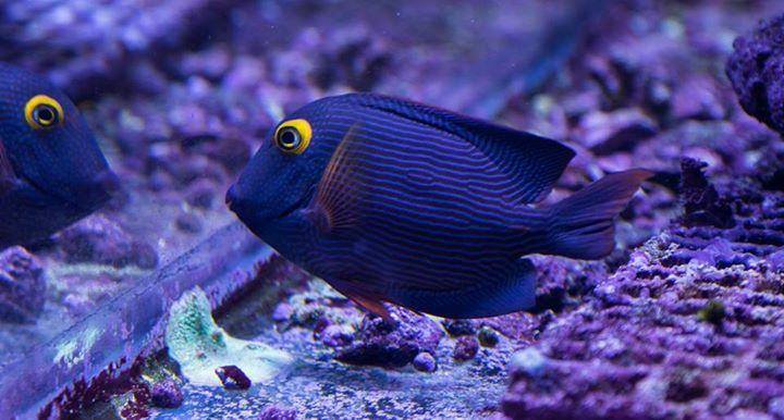 carlafish