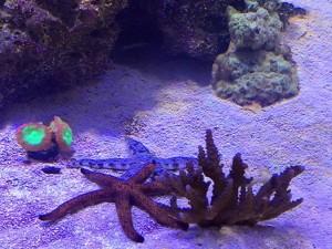 mattstarfish